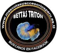 BETTAS TRITON