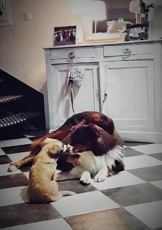 Noëlle, petite chienne née en octobre 2014 11072710