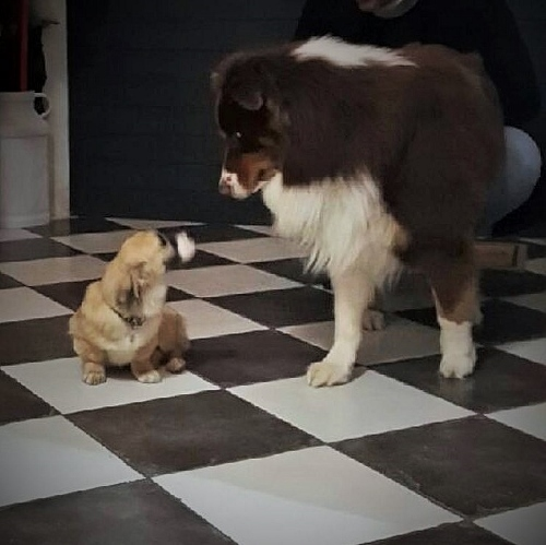 Noëlle, petite chienne née en octobre 2014 Img_0012