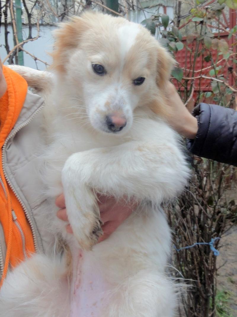 Lacy, chienne née en juin 2014, petit modèle Dsc01511