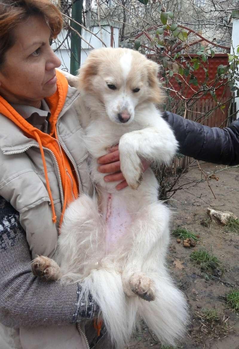Lacy, chienne née en juin 2014, petit modèle Dsc01512