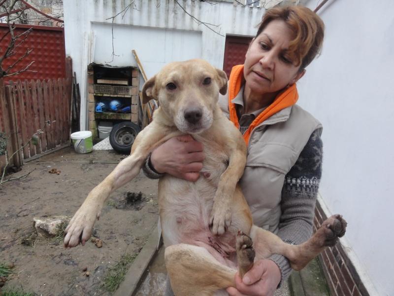 Tina, chienne sauvée de la rue, née en avril 2010  Dsc01523