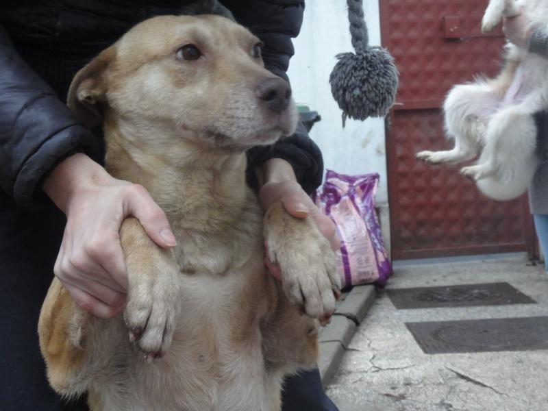 Tina, chienne sauvée de la rue, née en avril 2010  Dsc01524
