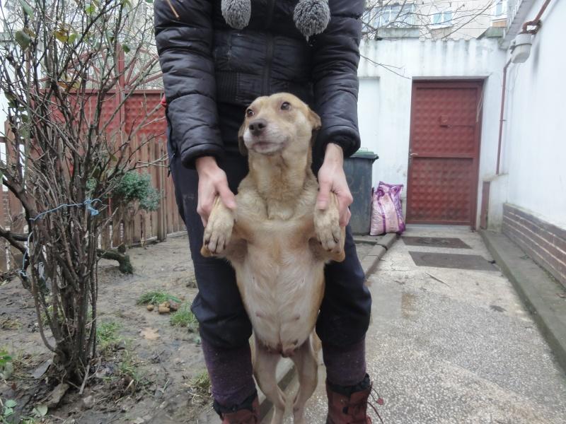 Tina, chienne sauvée de la rue, née en avril 2010  Dsc01525