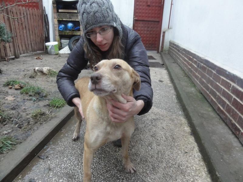 Tina, chienne sauvée de la rue, née en avril 2010  Dsc01526