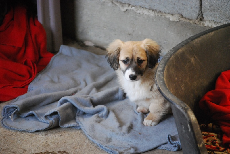 Noëlle, petite chienne née en octobre 2014 Dsc_0911