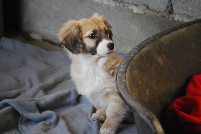 Noëlle, petite chienne née en octobre 2014 Dsc_0912