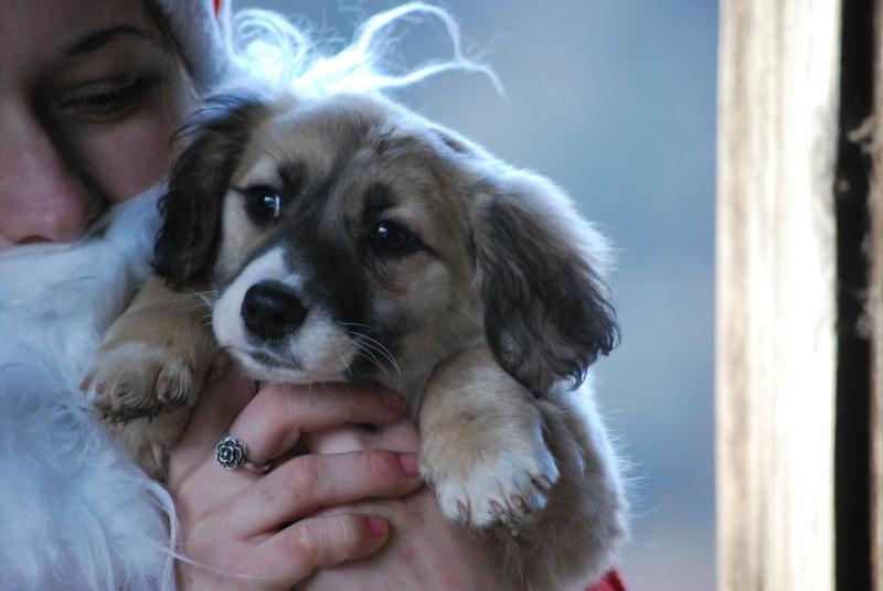 Noëlle, petite chienne née en octobre 2014 Dsc_0913