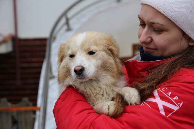 Lacy, chienne née en juin 2014, petit modèle Hx9a5810