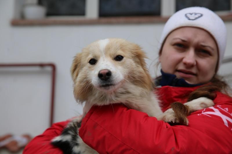 Lacy, chienne née en juin 2014, petit modèle Hx9a5811