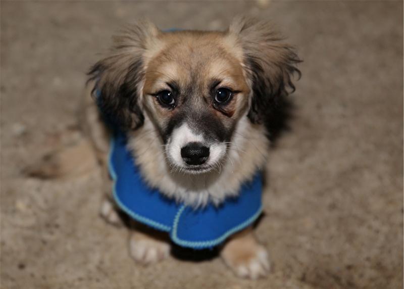 Noëlle, petite chienne née en octobre 2014 Hx9a6210