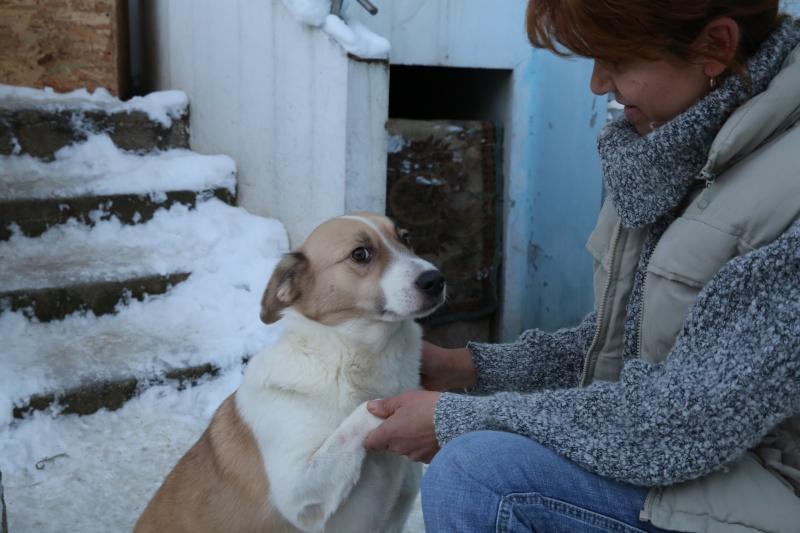 Murmurica, sauvetage de Sanda, chienne née en 2011 Hx9a6417