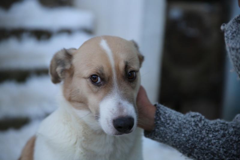 Murmurica, sauvetage de Sanda, chienne née en 2011 Hx9a6418