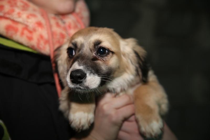 Noëlle, petite chienne née en octobre 2014 Hx9a7312