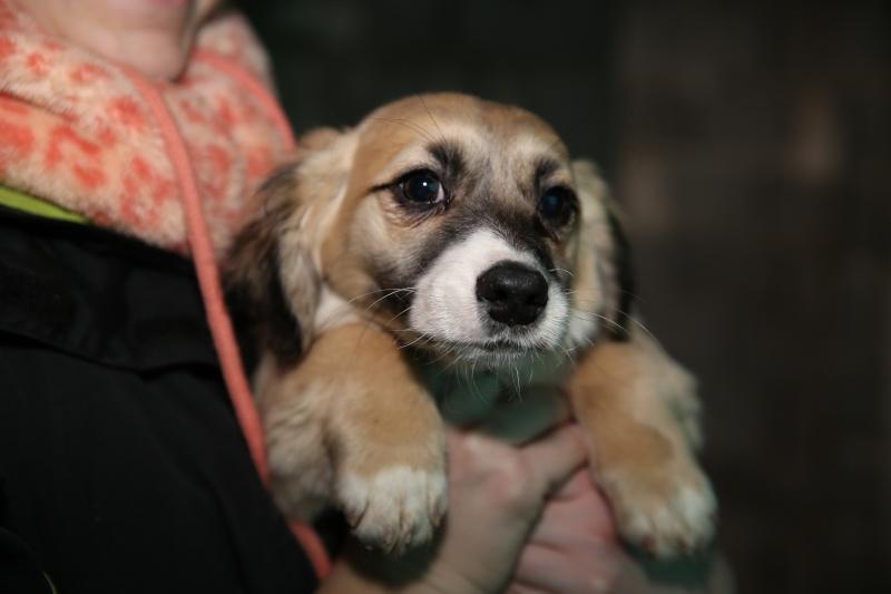 Noëlle, petite chienne née en octobre 2014 Hx9a7313