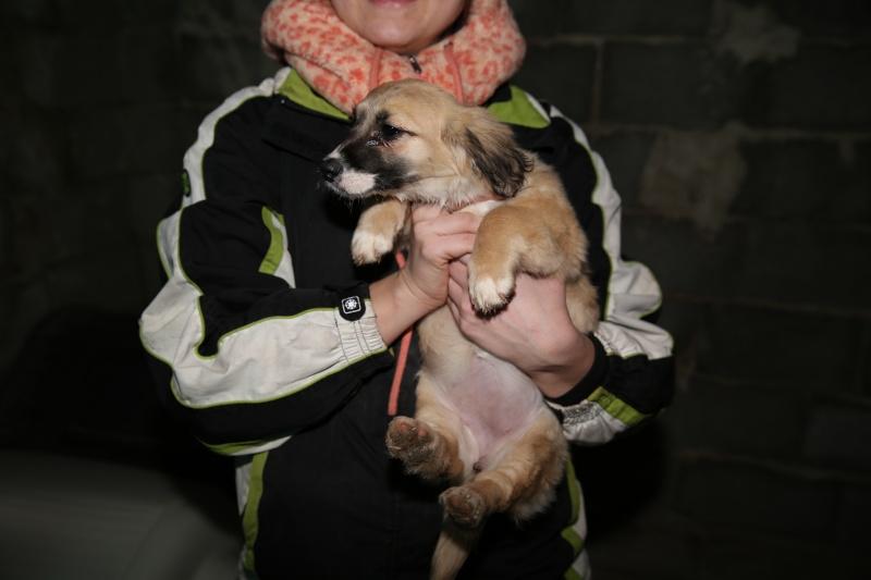 Noëlle, petite chienne née en octobre 2014 Hx9a7314