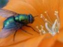 Thème du mois d'août 2013 : les insectes P1010310