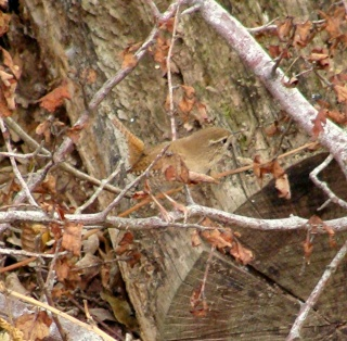 Les oiseaux du jardin (28 espèces d'oiseaux observées pour vous) 18-10-10
