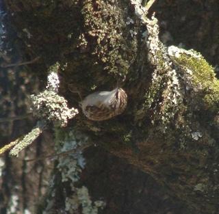 Les oiseaux du jardin (28 espèces d'oiseaux observées pour vous) Dsc03813