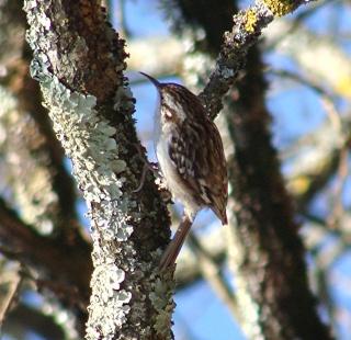 Les oiseaux du jardin (28 espèces d'oiseaux observées pour vous) Dsc03910