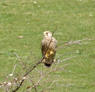 Les oiseaux du jardin (28 espèces d'oiseaux observées pour vous) Dsc04410