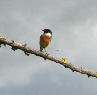 Les oiseaux du jardin (28 espèces d'oiseaux observées pour vous) Dsc06611
