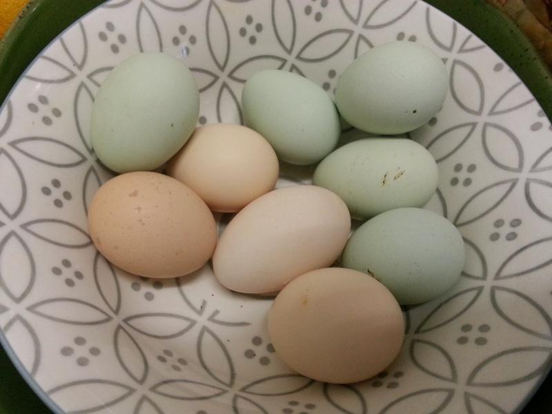Egg colours 2014-010