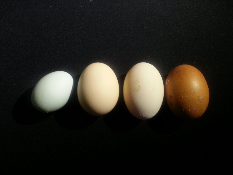 Egg colours 2014-011