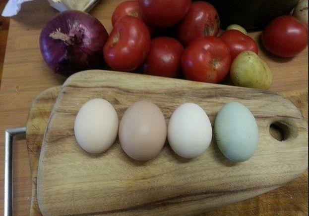 Egg colours Screen10