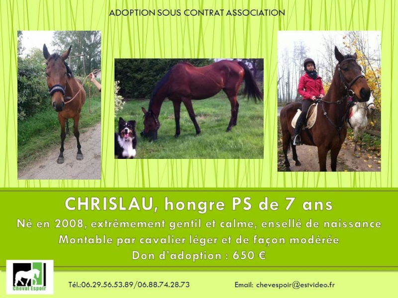 CHRISLAU DU MOULIN - PS né en 2008 Chrisl10