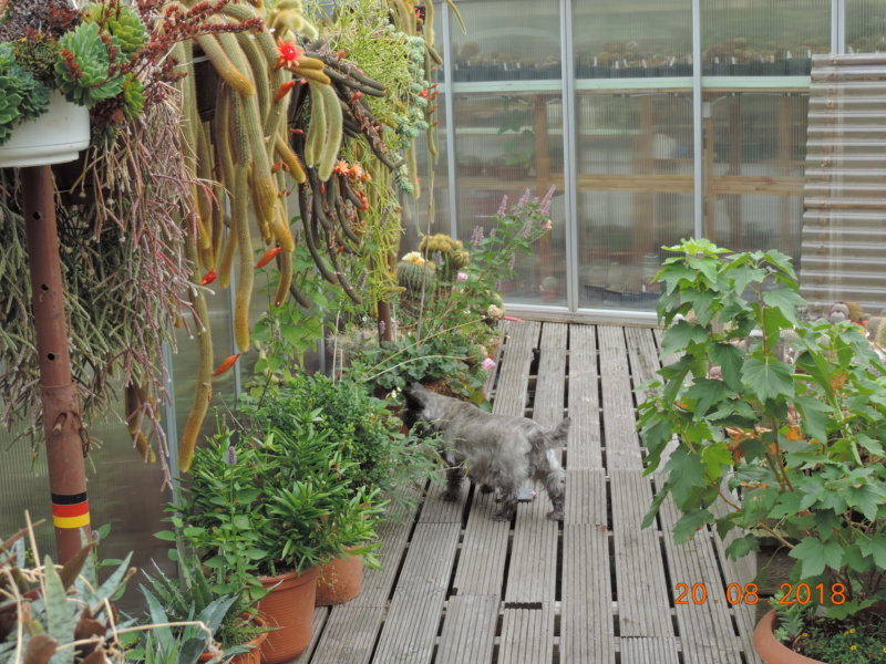 Cacti and Sukkulent in Köln, every day new flowers in the greenhouse Part 198 Bild1013