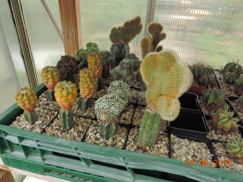Cacti and Sukkulent in Köln, every day new flowers in the greenhouse Part 198 Bild1027