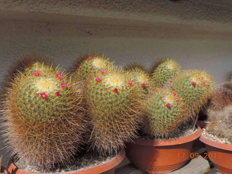 Cacti and Sukkulent in Köln, every day new flowers in the greenhouse Part 199 Bild1167