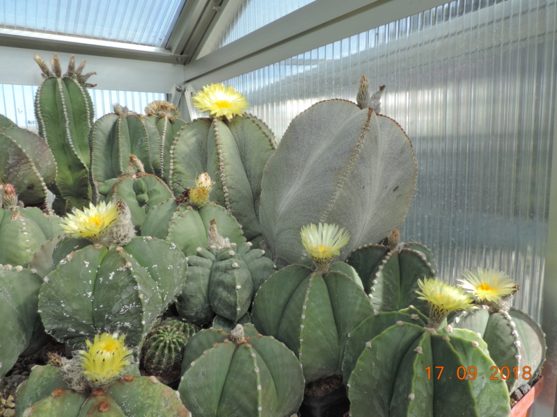 Cacti and Sukkulent in Köln, every day new flowers in the greenhouse Part 199 Bild1172