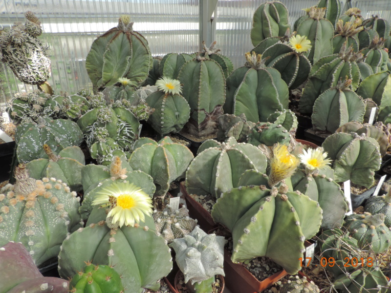 Cacti and Sukkulent in Köln, every day new flowers in the greenhouse Part 199 Bild1176