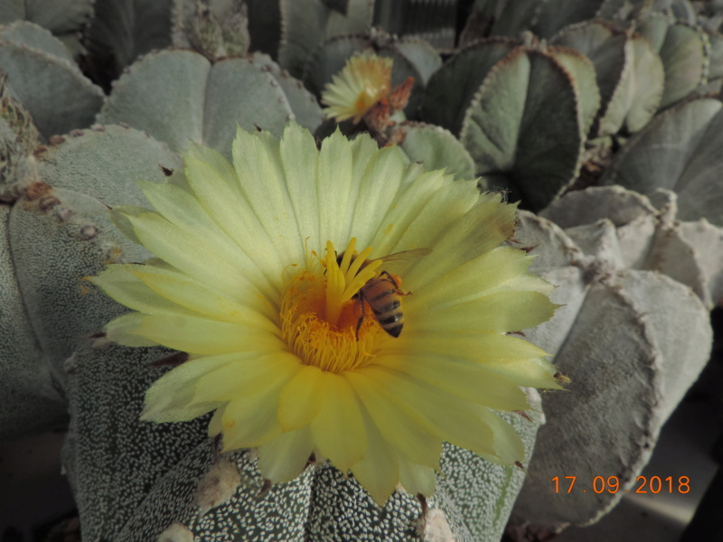 Cacti and Sukkulent in Köln, every day new flowers in the greenhouse Part 199 Bild1179