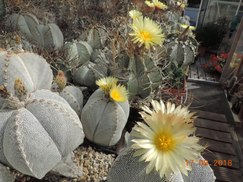 Cacti and Sukkulent in Köln, every day new flowers in the greenhouse Part 199 Bild1180