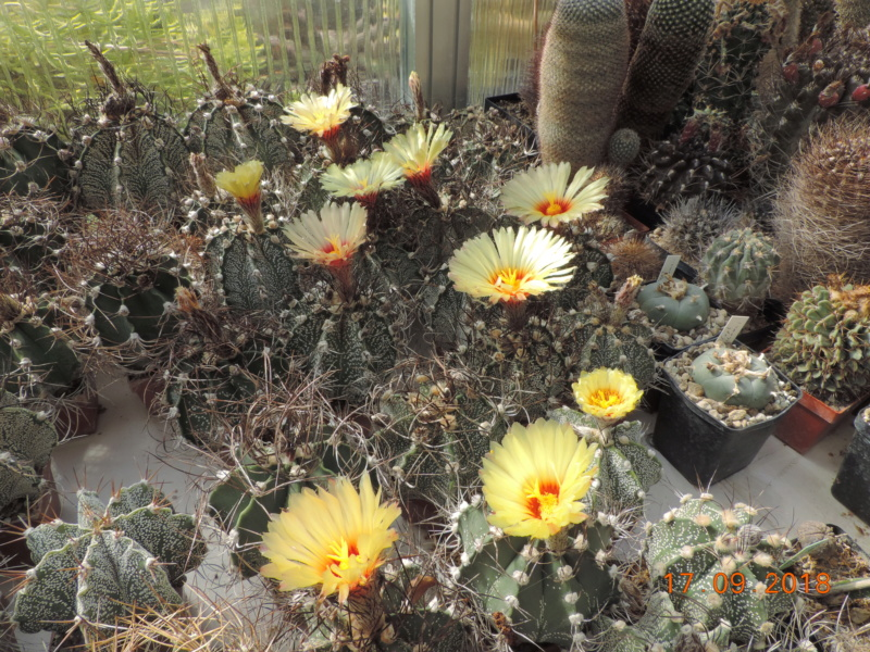 Cacti and Sukkulent in Köln, every day new flowers in the greenhouse Part 200 Bild1187