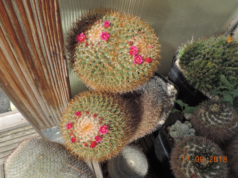 Cacti and Sukkulent in Köln, every day new flowers in the greenhouse Part 200 Bild1202