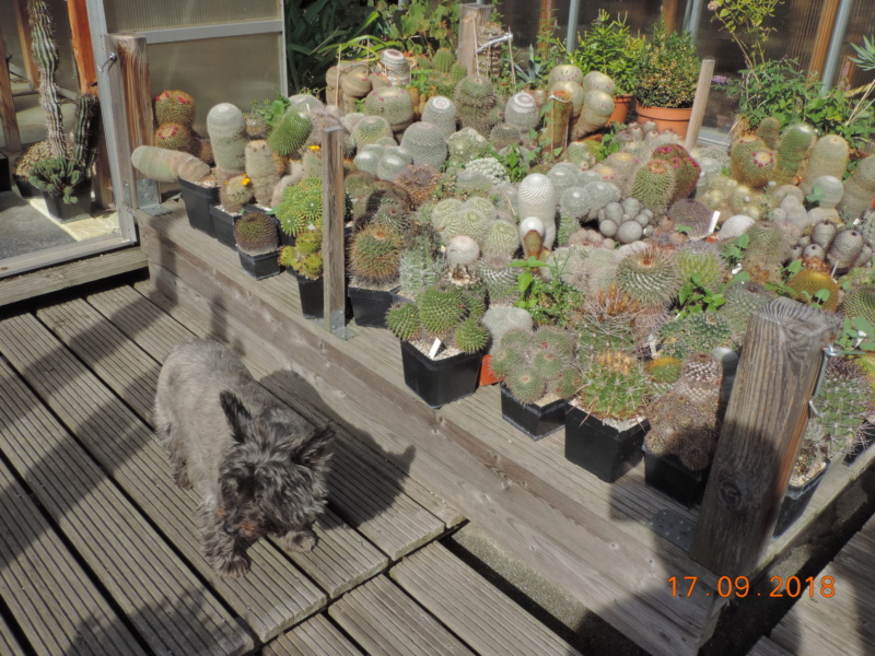 Cacti and Sukkulent in Köln, every day new flowers in the greenhouse Part 200 Bild1209