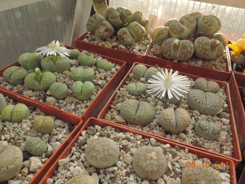 Cacti and Sukkulent in Köln, every day new flowers in the greenhouse Part 200 Bild1283