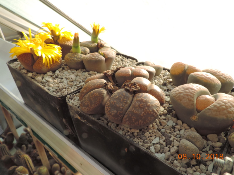 Cacti and Sukkulent in Köln, every day new flowers in the greenhouse Part 200 Bild1290