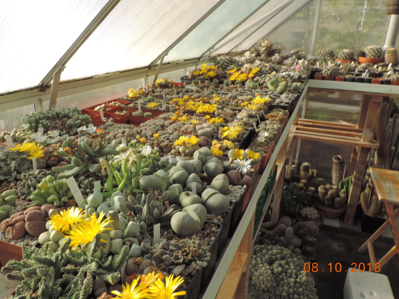 Cacti and Sukkulent in Köln, every day new flowers in the greenhouse Part 200 Bild1291