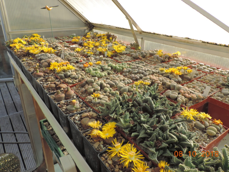 Cacti and Sukkulent in Köln, every day new flowers in the greenhouse Part 200 Bild1293