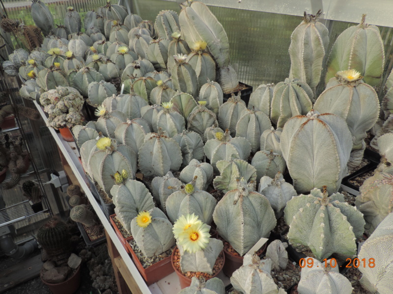 Cacti and Sukkulent in Köln, every day new flowers in the greenhouse Part 200 Bild1297