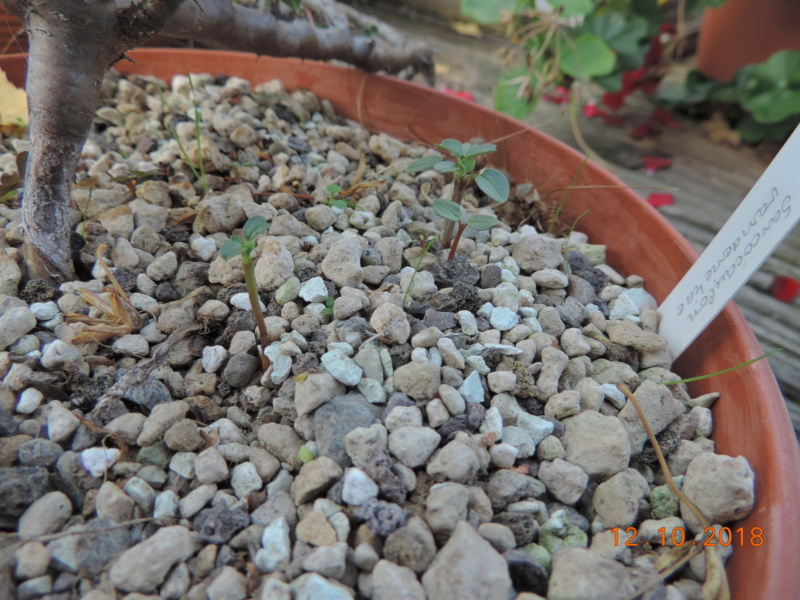 Cacti and Sukkulent in Köln, every day new flowers in the greenhouse Part 200 Bild1330