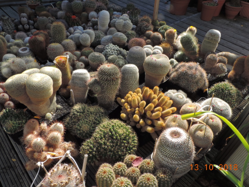 Cacti and Sukkulent in Köln, every day new flowers in the greenhouse Part 200 Bild1351
