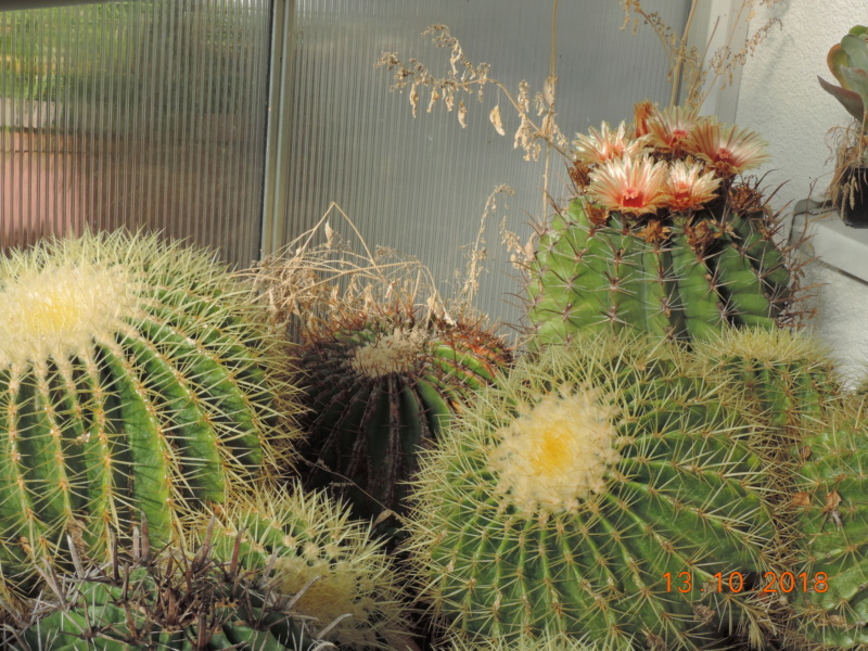 Cacti and Sukkulent in Köln, every day new flowers in the greenhouse Part 200 Bild1353