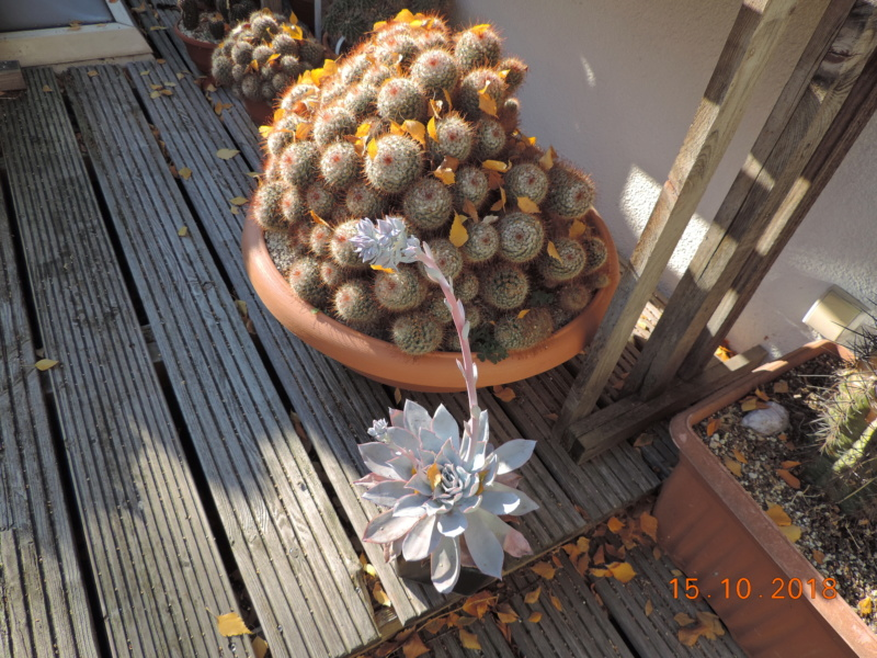 Cacti and Sukkulent in Köln, every day new flowers in the greenhouse Part 201 Bild1376