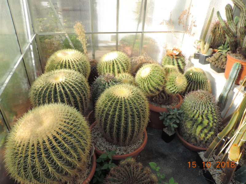 Cacti and Sukkulent in Köln, every day new flowers in the greenhouse Part 201 Bild1380
